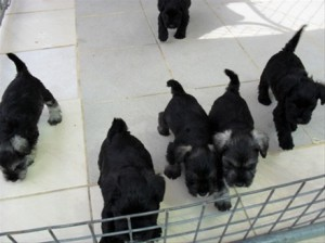 Tiled puppy pens