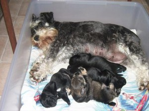 Mother and her 1 week old puppies